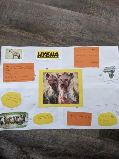 This is an amazing poster all about a hyena!