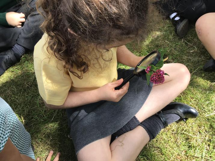 Looking closely at the parts of a plant
