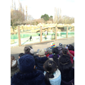 We enjoyed watching the sea lion show!