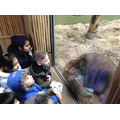 1L were lucky to get very close to the orangutan!