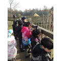 Looking at the giraffes!