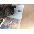 Miss Peats' cat enjoys reading