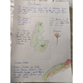 Evie's map of the Amazon Rainforest