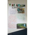 Rachael's work about the Amazon Rainforest