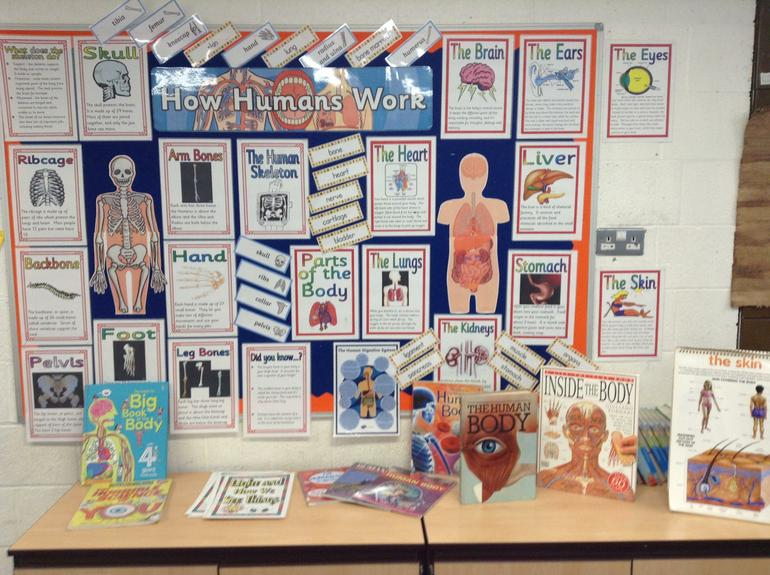 How humans work by Year 4