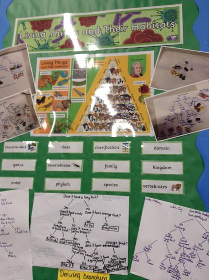 Living Things and their Habitats by Year 6