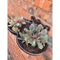 Tallulah's plants