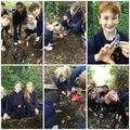 looking for artifacts from the Old Farm as part of our Old Olton Topic
