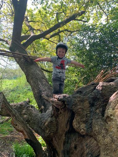 Jensen climbing trees, look how high I am!