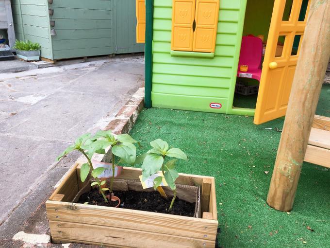 Iyla and Amelia have nurtured their sunflowers