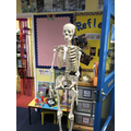 Herman has spent today in Reception helping them to learn all about their bones.
