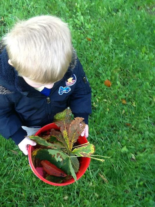 We also collected leaves, twigs, mud and grass