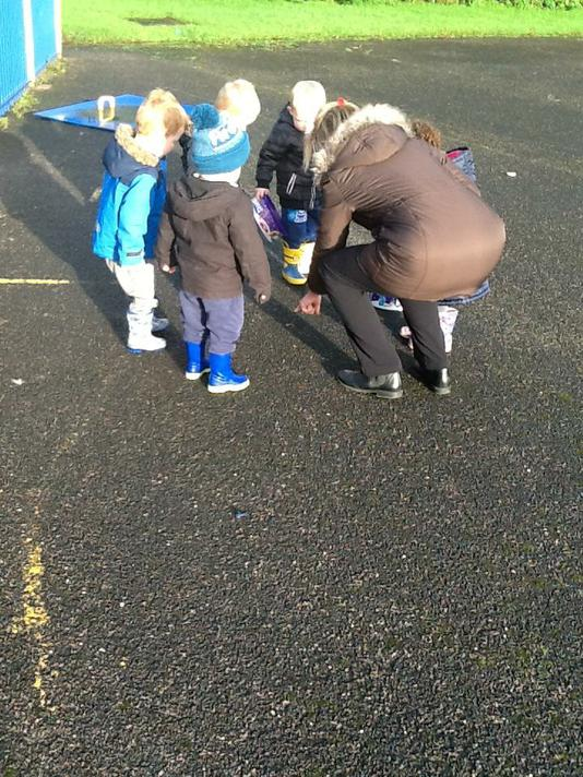 We looked for mini beasts and insects