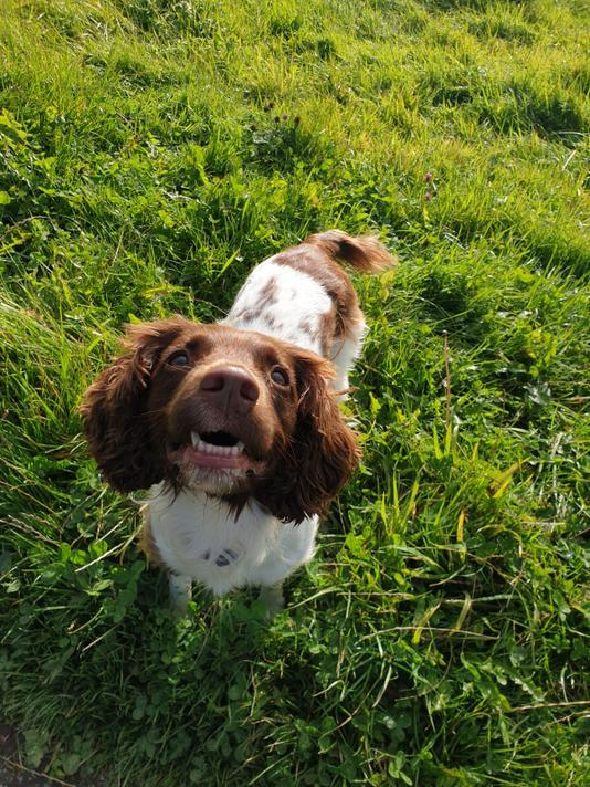Molly spends most of her days running around in the fields, her wellbeing comes first!