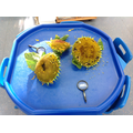 We investigated sunflowers and their seeds...
