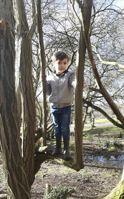 Jude (Reception) enjoyed exploring the nature over Lockdown! He loved climbing the trees!