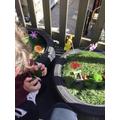 The fairy gardens