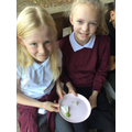 We were looking at plant reproduction in Science.