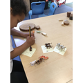 I labelled all the animals using my phonics.