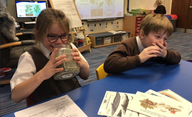 Learning about seaweed in Year 2