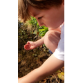 Ethan looking for minibeasts.
