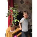 Leo with his amazing bean plant!