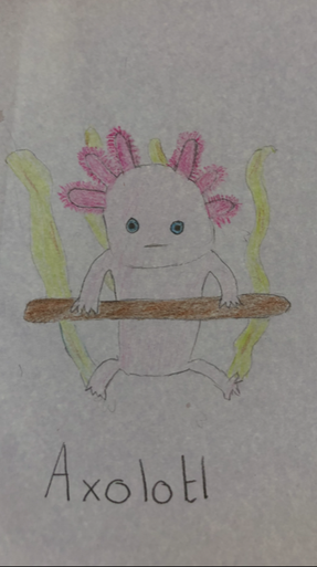 Carly's strange creature the Axolotl! Super work!