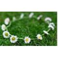 Can you make a daisy chain?