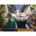 watered, labelled and on a sunny windowsill