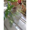 making a new basil plant 4
