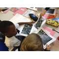 Year 3 - Investigating Fossils