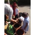 Reception: Planting spring bulbs