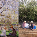 Springtime by Monet - Ipswich spring by L & H