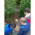 Making bird nests