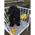 Basil with home made daffodils