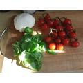 preparing a basil leaf salad