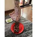 Arya practising doubling with cup cakes