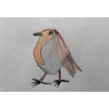 William's robin drawing for the RSPB competition