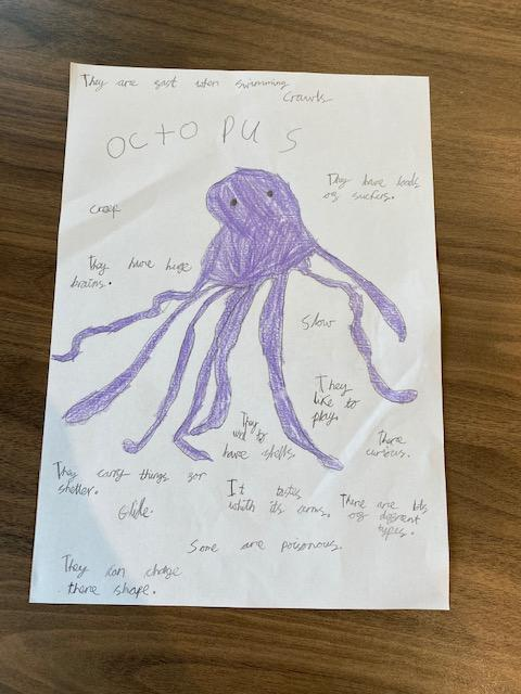 Florence's octopus facts