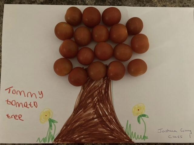 Joshua's tomato tree