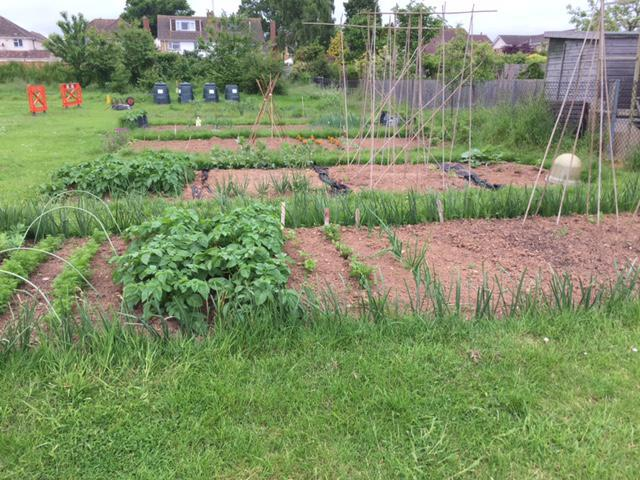 View of all the allotments.