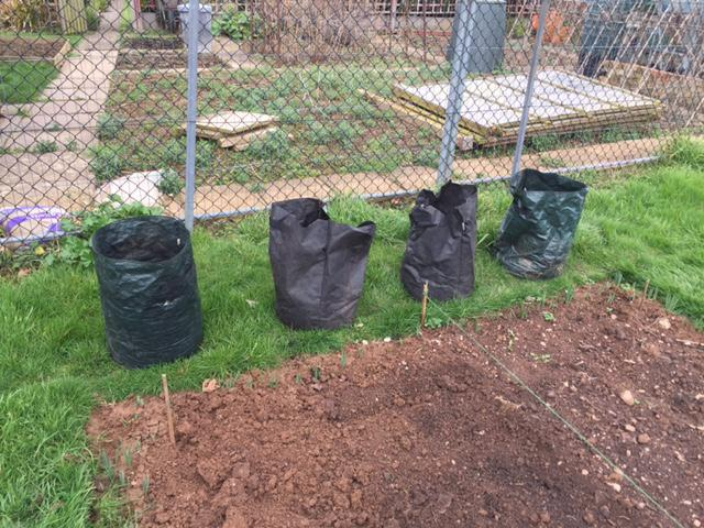 Potato bags prepared and ready for planting.