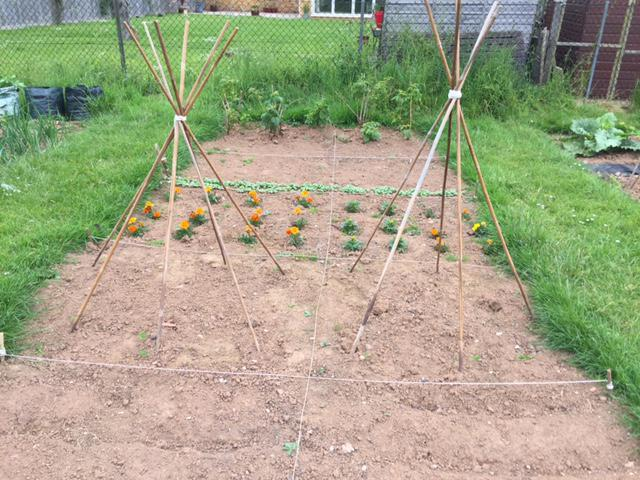 The marigolds and radishes are growing well.