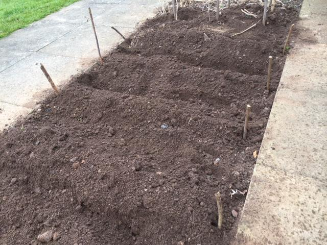 Potatoes planted and covered over. Now we wait for June to dig them up.