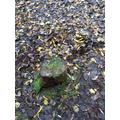 Leaf Art - Forest School