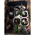 Reception - Easter gardens