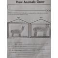Amelie's llama fact file