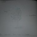 Look at our wonderful seasonal trees!