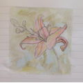 Recreating Georgia O'Keeffe's artwork