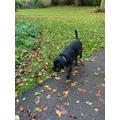 Wilson's Autumn walk!